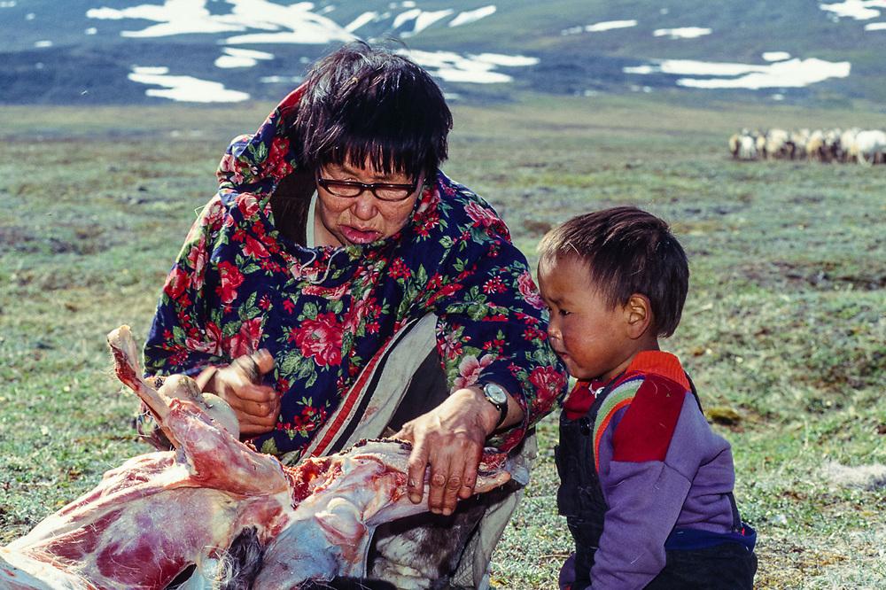 Butchering a reindeer, Val 'karvaam Valley Chukotsk Peninsula, Northeast  Russia