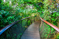 Tree Canopy Walkway, Kirstenbosch National Botanical Garden, Cape Town, South Africa.