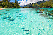 Motu Tiahura & Motu Fareone, Tiahura, Moorea, French Polynesia