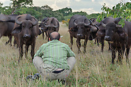 Impressionen aus dem Liuwa Plain Nationalpark in Sambia mit Fotografen am Werk mit Büffeln.