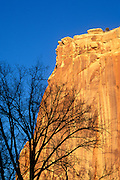 Silhouetted tree against colorful cliff of the Waterpocket Fold in Fruita, Capitol Reef National Park, Utah