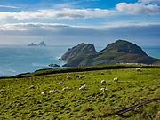 The Skellig Rocks of South Kerry, Ireland. Skellig Michael, Little Skellig and The Lemon Rock.<br /> Photo: Don MacMonagle - macmonagle.com