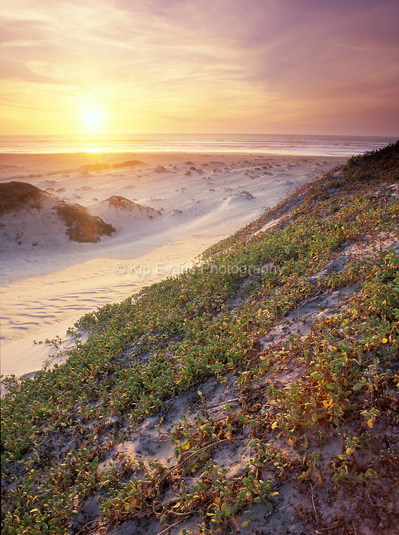 Guadalupe Dunes State Park, Guadalupe CA
