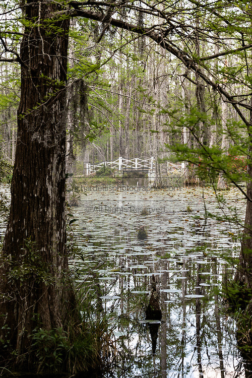Foot bridge across the blackwater bald cypress and tupelo swamp during spring at Cypress Garden April 9, 2014 in Moncks Corner, South Carolina.