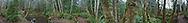 360 degree panorama Anderson Landing Preserve, Kitsap Peninsula, Washington, USA