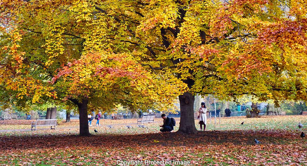 London, UK  Autumn in St. Jame's Park<br /> Photo by Dennis Brack