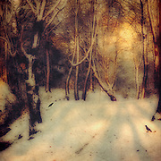 Warm winter sunrise in a snowy forest - textured photograph<br /> Society6 prints: https://society6.com/product/winter-gold-p4x_print#1=45<br /> Redbubble prints: http://www.redbubble.com/people/dyrkwyst/works/20922220-winter-gold?p=photographic-print