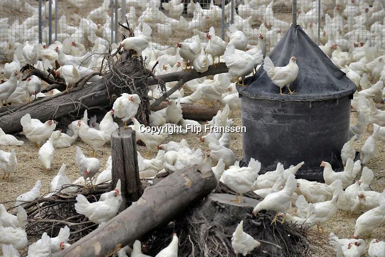 Nederland, the Netherlands, Oirlo, Venray,  10-10-201924.000 Kippen, leghennen, in deze moderne en meest duurzame kippenstal . De Kipster is een kippenbedrijf wat milieuvriendelijk en diervriendelijk eieren produceert. Kippen hebben ruimte en kunnen naar buiten. De stal is klimaatneutraal.Via zonnepanelen op het dak wordt eigen stroom opgewekt.Foto: Flip Franssen