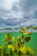 New Zealand mangroves & estuaries
