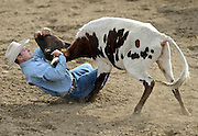 Craig Weichel wrestles a steer to the ground during the CPRA Rodeo, Sunday, Aug. 3, 2014, in the Jack Murphy Arena at the Boulder County Fairgrounds in Longmont. Go to timescall.com for more photos.<br /> (Matthew Jonas/Longmont Times-Call)