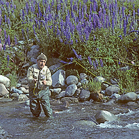 FISHING, Chile. Fly fishing guide Carlos Munoz by spring lupines,near Coihaique (Patagonia) (MR)