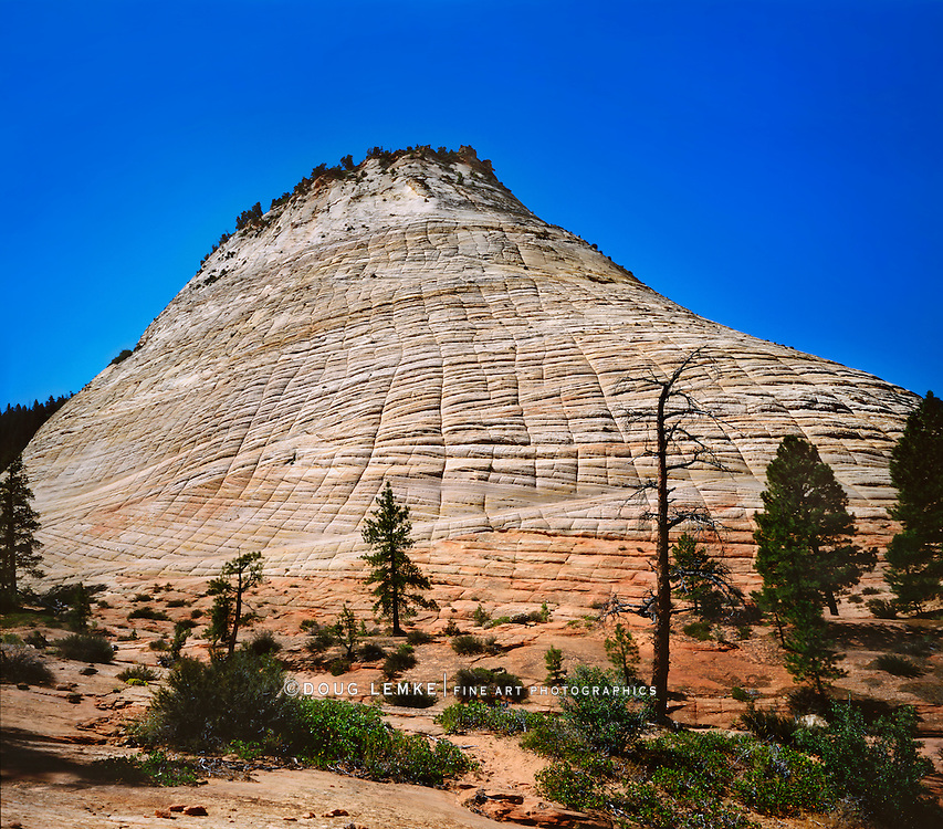 The Checkerboard Mesa, A Petrified Sand Dune At Zion National Park, Utah, USA