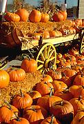Pumpkin harvest display on antique cart.  Minnesota USA