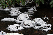 Ice-ringed stones in the stream echo the raked sand of the nearby karesansui garden at the Asticou Azalea Garden, Northeast Harbor, Maine