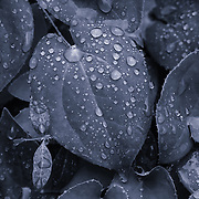 """Metallica""<br />