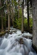 Creek in Glacier National Park.