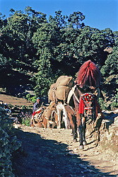 Donkeys Carrying Goods On Trail