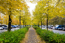 Autumn colours on trees along footpath on Metzer Strasse in Prenzlauer Berg in Berlin Germany