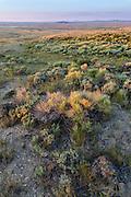 Red Desert of Southwest Wyoming at sunrise
