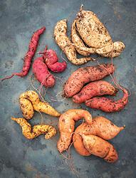Sweet potatoes - Ipomoea batatas 'Beauregard', 'Evangeline', 'Bonita', 'Murasaki' and 'Kaukura'