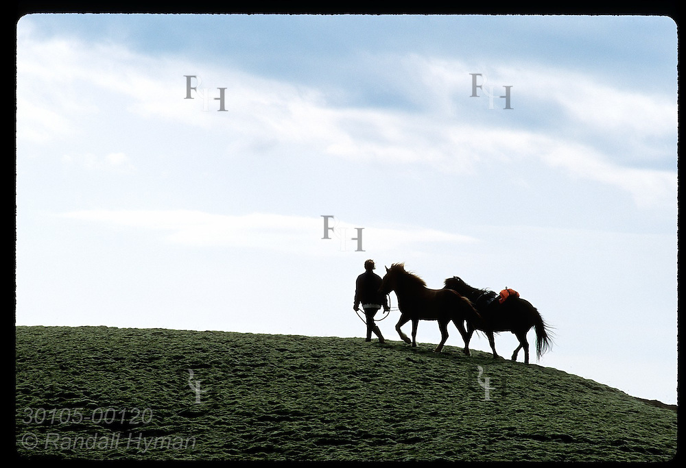 Silhouetted horseman leads two horses along ridge after long day of riding; Kirkjubaejarklaustur. Iceland