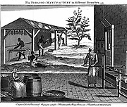 Various stages in the production of tobacco, Virginia.  Male, female and child slaves rolling dried tobacco into ropes, background.  Foreground, sorting leaves and pressing tobacco. Tobacco plant (Nicotiana tabacum) at 2.  Copperplate engraving,  London, 1750.