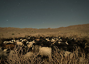 A sheep and goat pen at night in a nomad's camp on edge of Lut Desert.