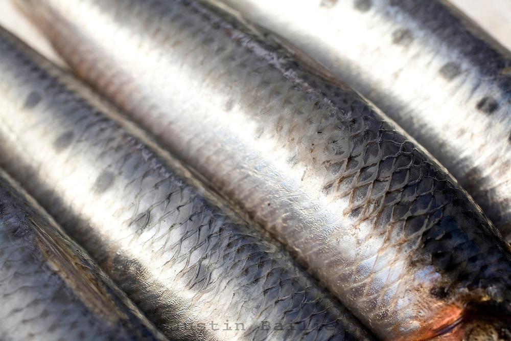 Still life of sardines.