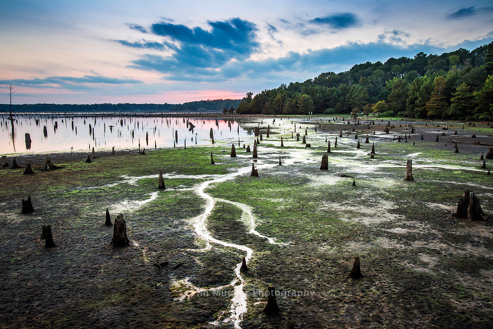 The lake at Louisiana's Lake D'Arbonne State Park is occasionally drawn down to allow repairs to piers and boat launches. The 655-acre park with Piney forests, five fishing piers, and a beautiful lake attracts visitors from across the state.