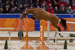 158 - Expected<br /> KWPN Hengstenkeuring - 's Hertogenbosch 2012<br /> © Dirk Caremans