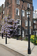 Wisteria in the law area of London near Lincolns Inn Fields, London, England, United Kingdom. This area of central London is where many of the law courts are based in addition to offices of those involved in the law business.