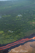 Aerial view of incandescent lava river draining from Fissure 8 of Kilauea Volcano east rift zone near the town of Pahoa. The river of lava flows downhill through agricultural lots in Kapoho, Puna District, Hawaii Island ( the Big Island ), Hawaiian Islands, U.S.A.; properties upwind of the river of lava remain lush and verdant, while vegetation on downwind lots on the other side of the river has been killed by the toxic fumes released by the lava.