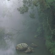 Eungella National Park in Australia.