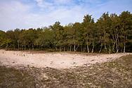 birch trees in the nature park Oranjezon near Vrouwenpolder on the peninsula Walcheren, Zeeland, Netherlands.<br /> <br /> Birken im Naturpark Oranjezon bei Vrouwenpolder auf Walcheren, Zeeland, Niederlande.