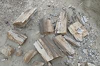 Petrified tree trunk and wood, Bisti Badlands, Bisti/De-Na-Zin Wilderness, New Mexico