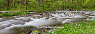 66745-04506 Panoramic of Straight Fork Creek in spring, Great Smoky Mountains National Park, NC