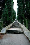 Cypress-lined stairway viewed from bottom of Glavica Svetog Antuna (Hill of Saint Anthony). Korcula, island of Korcula, Croatia