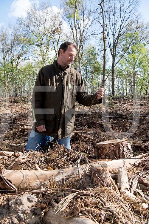 BROEKLANDVan naald naar Loof.<br /> Mark Zekhuis, ecoloog bekijkt de geplante jonge Wilgen.<br /> De Wilgen vervangen het naaldhout, dat weggehaald is.<br /> FFU PRESS AGENCY COPYRIGHT FRANK UIJLENBROEK