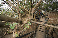Banyan tree branches engulf the Anping Tree House in Tainan, Taiwan.