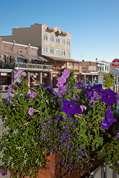 """""""Flowers in Downtown Truckee 1"""" - These flowers and old buildings were photographed along commercial row in historic Downtown Truckee, California."""
