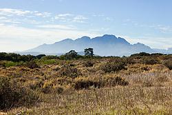 Dec. 05, 2012 - Winelands of South Africa near Stellenbosch, Drakenstein Mountain chain in the distance (Credit Image: © Image Source/ZUMAPRESS.com)