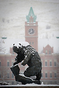 The grizzly bear at the University of Montana. Missoula Photographer, Montana Photographer, Pictures of Missoula, Montana Photos