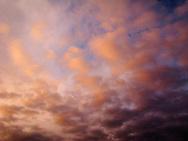 Evening alpenglow warms cumulus clouds