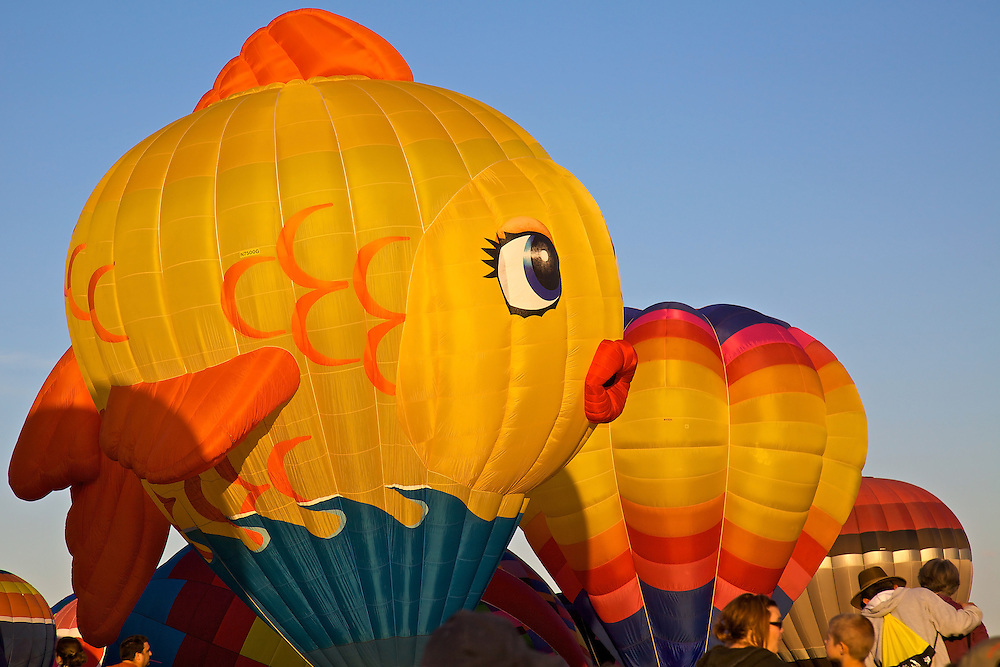 A goldfish-shaped balloon launches at the annual Albuquerque Balloon Fiesta