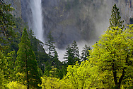 Mist and spray from Bridalveil Fall in spring and trees, Yosemite Valley, Yosemite National Park, California