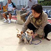 Asia, Japan, Tokyo. Japanese woman pridefully poses her two lapdogs in their outifts.