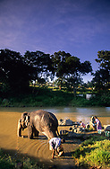 A mahout bathes his elephant while his family washes clothes in a river in Tamil Nadu, India.