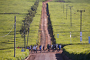 Long distance runners pass through a tea plantation, near Kericho, Kenya, owned by Unilever. Owned by Unilever. Workers live in company housing and make $3 to $9 US per day, depending on how much tea they pick. They are paid by the kilo. The young tea leaves  are picked every two weeks.