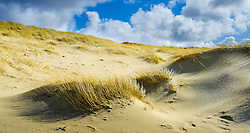 Grasses growing on the sand dunes on the beach at Ardroil, Isle of Lewis, Outer Hebrides, Scotland<br /> <br /> (c) Andrew Wilson | Edinburgh Elite media