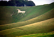 White horse carved on hillside of steep chalk scarp slope at Cherhill, Wiltshire, England, UK dates from the late 18th century